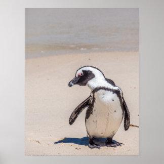 Playful Penguin Poster