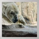 Playful Polar Bear Poster