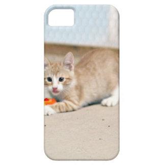 Playful Rocky iPhone 5 Case