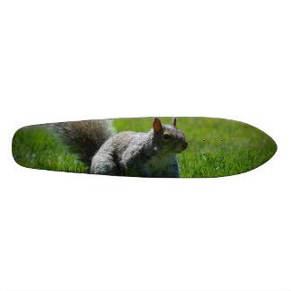 Playful Squirrel Skate Board Decks