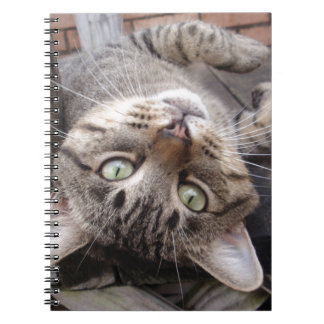 Playful Striped Feral Tabby Cat Note Book