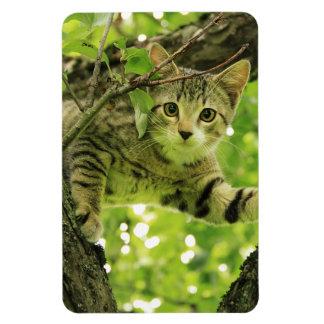Playful Wild Cat Climbing Tree Magnet