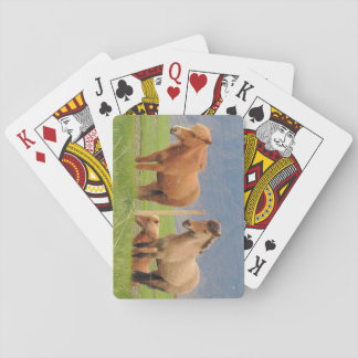 Playing Cards With Icelandic Horses Picture