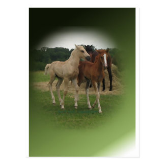 Playing Foals Crosstitched Postcard