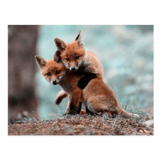 Playing Red Fox Kits Postcard
