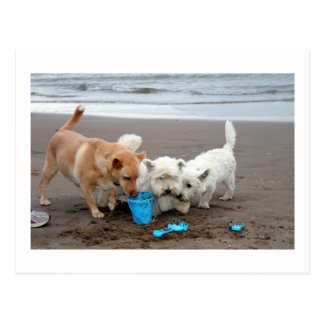 Playtime on the beach postcard