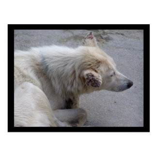 PLEASE HELP DESPERATE DOGS IN NEPAL POSTCARD