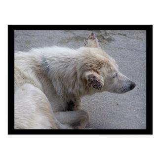 PLEASE HELP DESPERATE DOGS IN NEPAL POSTCARD