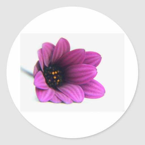 pleasing purple round sticker