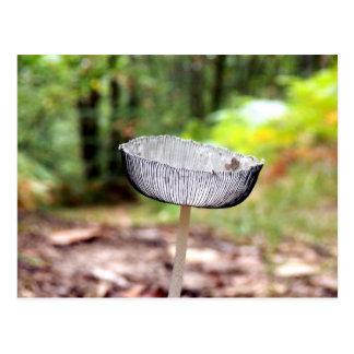 Pleated Inkcap Mushroom Postcard