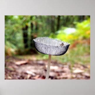 Pleated Inkcap Mushroom Poster