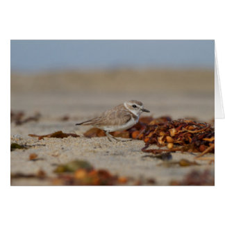 Plover and Seaweed Card