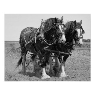 PLOWING the LAND with CLYDESDALE HORSES Poster