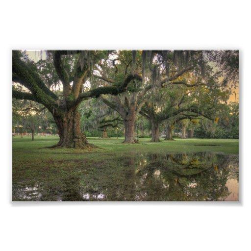Pluie de parc d'Audubon Photographie