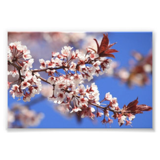 Plum Blossom Photo Print