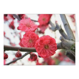 plum blossom spring pink flowers card