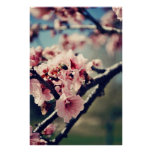 Plum Blossoms and Bee Poster