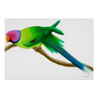 Plum Headed Parakeet Parrot Print