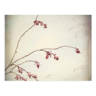 Plum Tree Branch with Spring Buds | Seabeck, WA Postcard