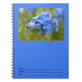 Plumbago - Blue Summer Flowers Picture Notebooks