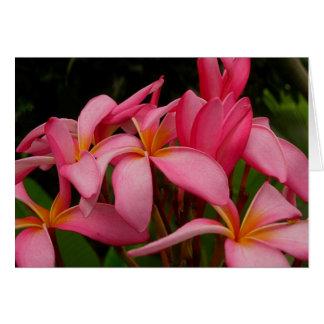 Plumeria - Ace's Wild Pink Card