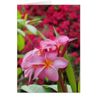 Plumeria and Bougainvillea Card