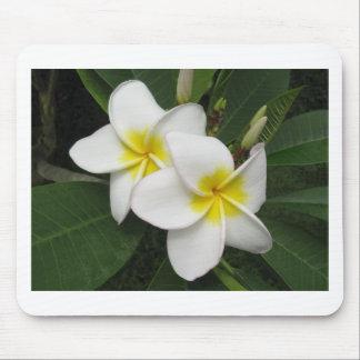Plumeria Blossom Mouse Pad