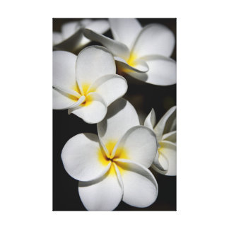 Plumeria Gallery Wrapped Canvas