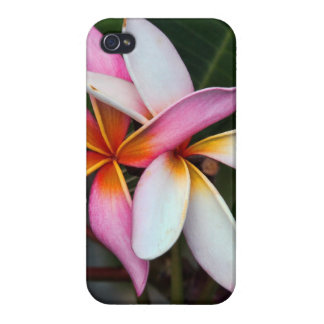 Plumeria Covers For iPhone 4