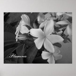 plumeria - Customized Poster