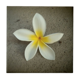 Plumeria flower hawaiian decorative tile