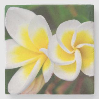 Plumeria flowers close-up, Hawaii Stone Coaster