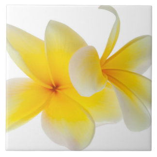 Plumeria Flowers Hawaiian White Yellow Frangipani Tile