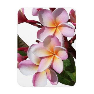 Plumeria Flowers Premium Magnet