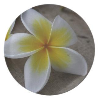 Plumeria - Frangipani Floral Photograph Dinner Plate