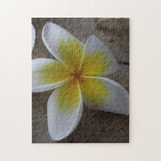 Plumeria - Frangipani Floral Photograph Jigsaw Puzzle