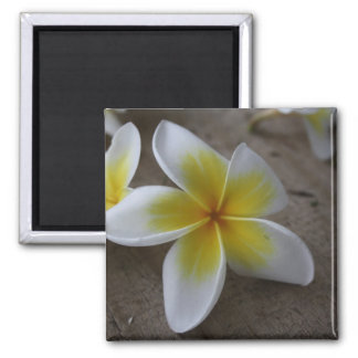 Plumeria - Frangipani Floral Photograph Magnet