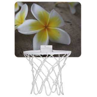 Plumeria - Frangipani Floral Photograph Mini Basketball Hoop