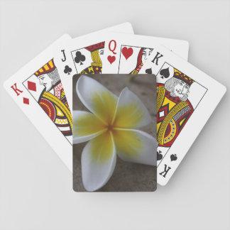 Plumeria - Frangipani Floral Photograph Playing Cards