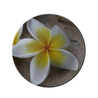 Plumeria - Frangipani Floral Photograph Porcelain Plate