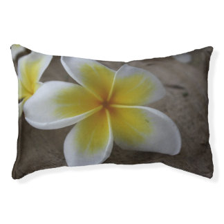 Plumeria - Frangipani Floral Photograph Small Dog Bed