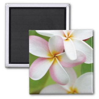 Plumeria Frangipani Hawaii Flower Customized Blank Square Magnet