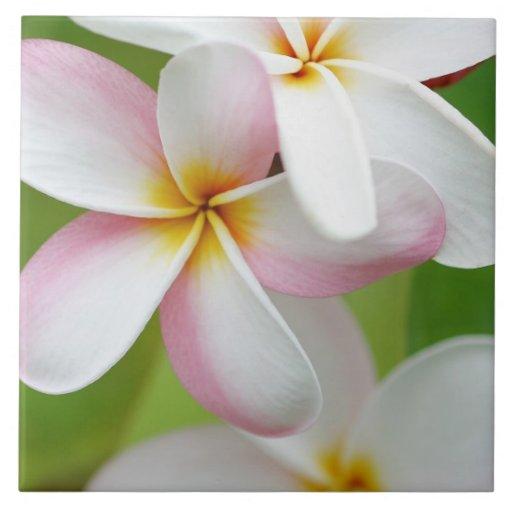 Plumeria Frangipani Hawaii Flower Customized Blank Ceramic Tile