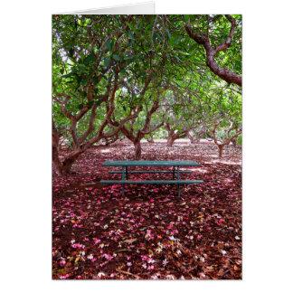 Plumeria Grove Card