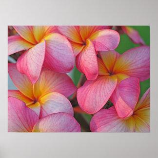 Plumeria - Hanna Pink Glow Poster