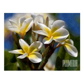 Plumeria Horizontal Postcard
