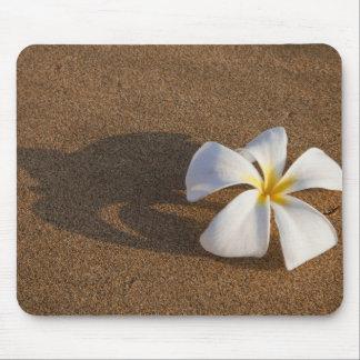 Plumeria on sandy beach, Maui, Hawaii, USA Mouse Pad