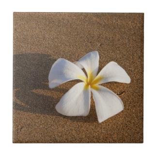 Plumeria on sandy beach, Maui, Hawaii, USA Tile