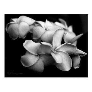 Plumeria postcard.. postcard