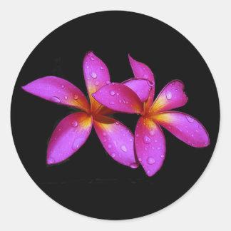 Plumeria purple on black background classic round sticker